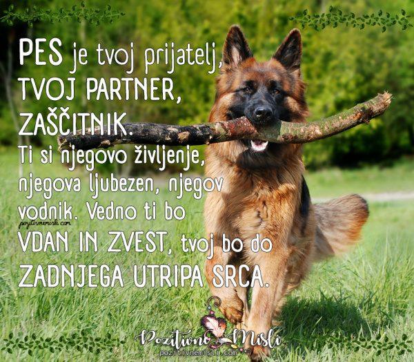 Pes je tvoj prijatelj, tvoj partner,  zaščitnik - Najlepše misli o psih
