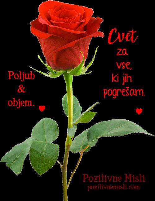Žalostne misli - Cvet v spomin umrlim 🌹🙏🌹