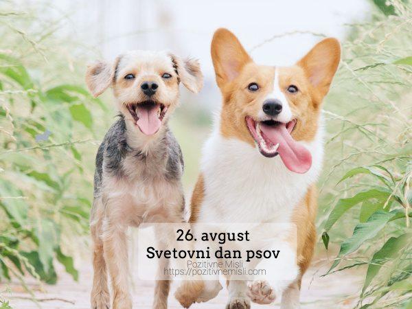 26. avgust - Svetovni dan psov