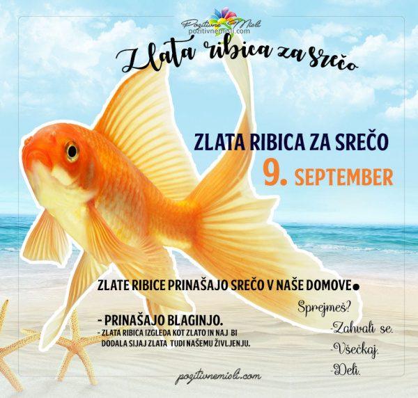 9. september - 365 srečnih dni - zlata ribica za srečo