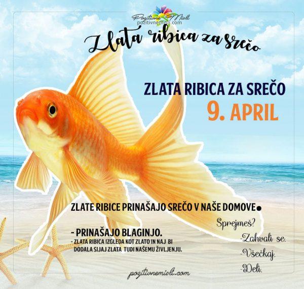 9. april - 365 srečnih dni - zlata ribica za srečo
