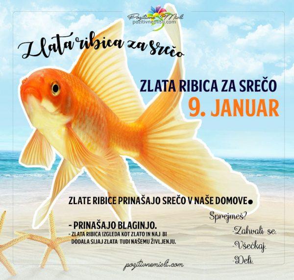 9. januar - 365 srečnih dni - zlata ribica za srečo