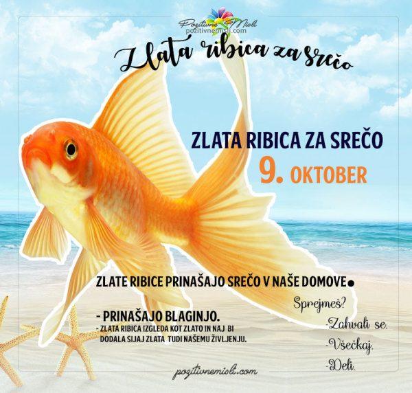 9. oktober - 365 srečnih dni - zlata ribica za srečo