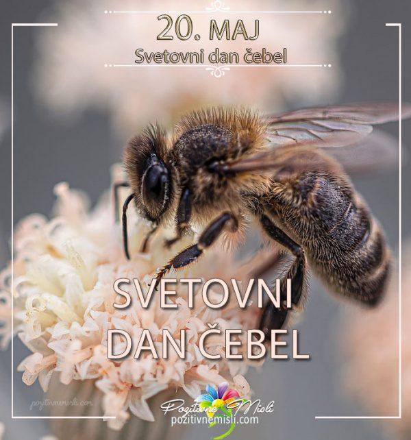 20. maj - svetovni dan čebel