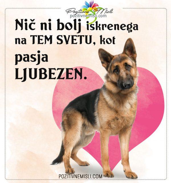 Nič ni bolj iskrenega  - najlepše msili o psih