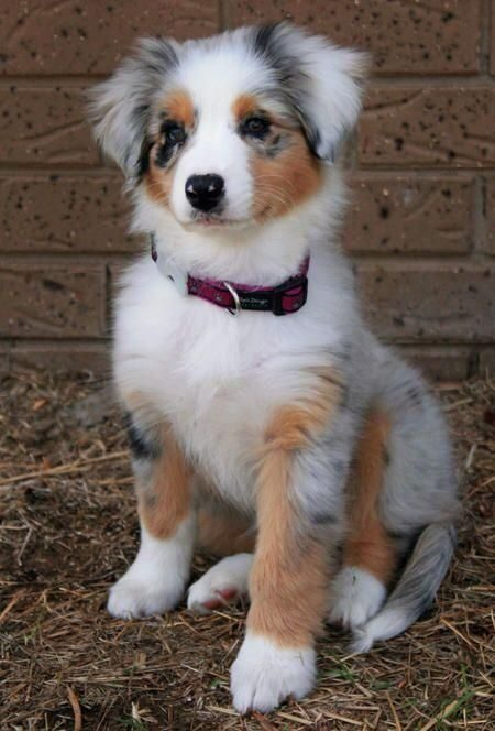 Misli o psih - Hvaležnost je pasja