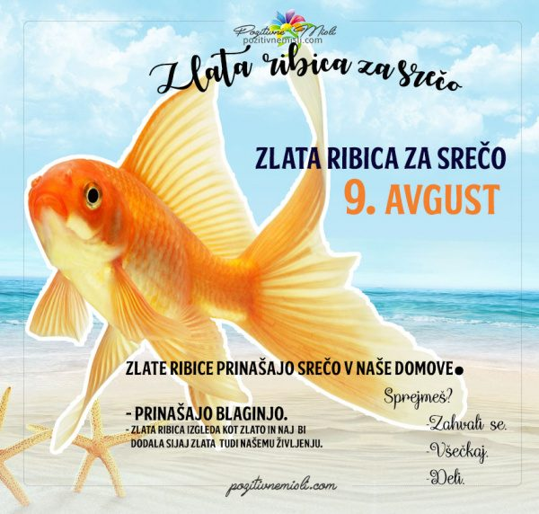 9. avgust - 365 srečnih dni - zlata ribica za srečo
