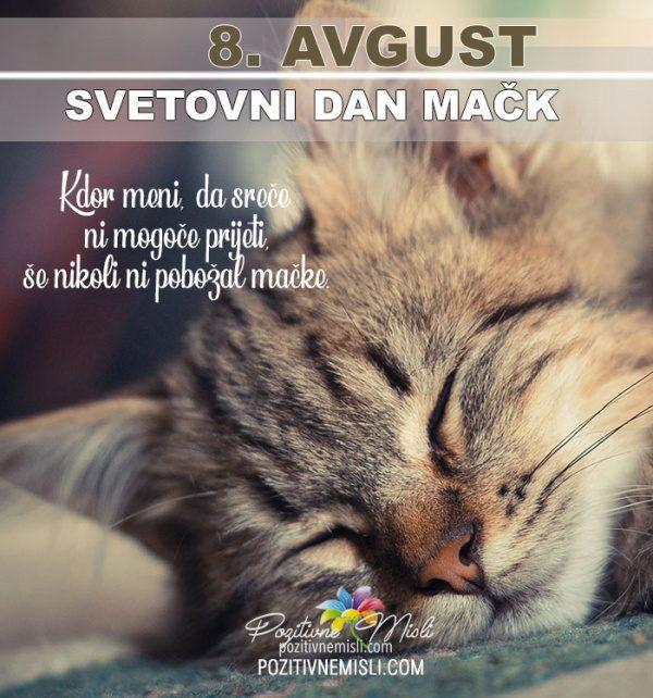 8. avgust - svetovni dan mačk