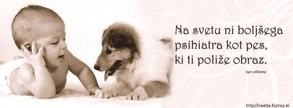 Pes je najboljši prijatelj - Misli o psih