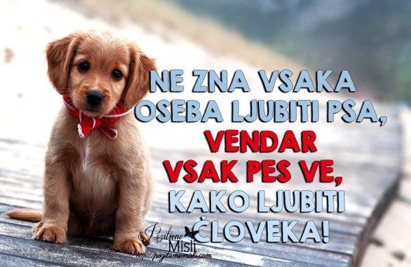 O psih - Misli - Ne zna vsaka  oseba ljubiti psa
