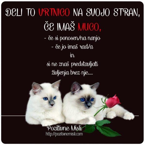 Deli to vrtnico na svojo stran, če imaš muco mačko mačak mucek