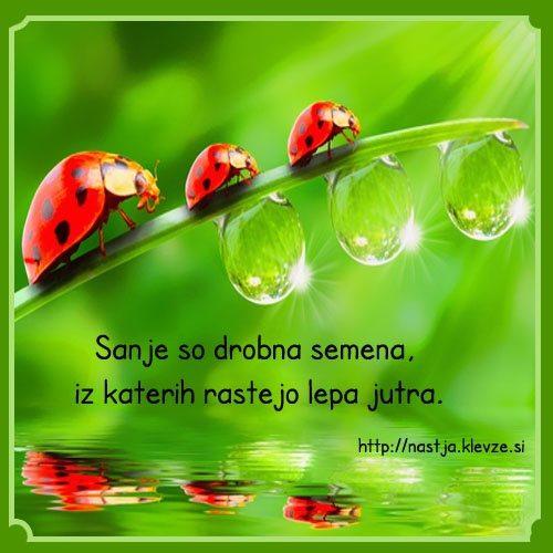 Sanje so drobna semena, iz katerih rastejo lepa jutra.