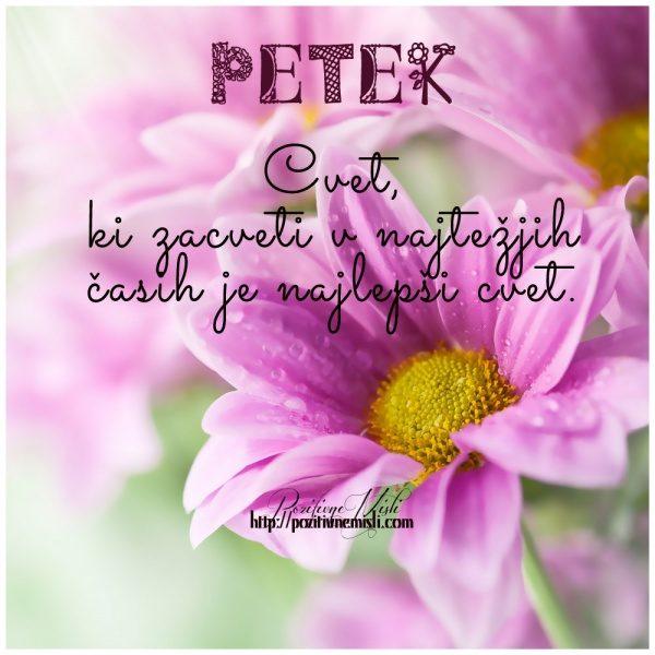 PETEK  - Cvet,  ki zacveti v najtežjih  časih je najlepši cvet.