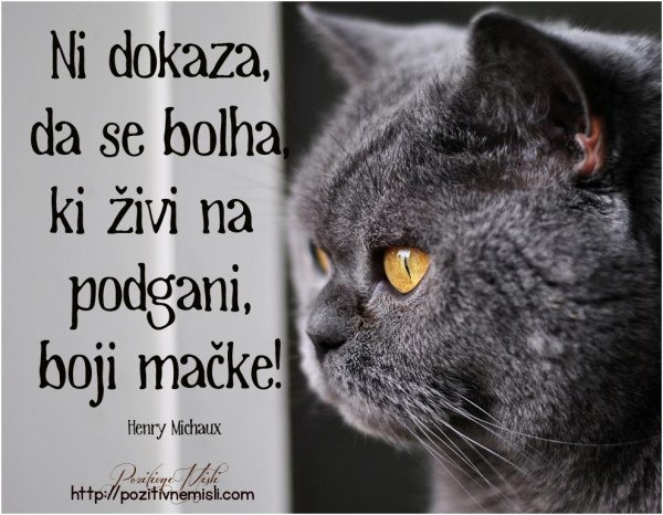 Ni dokaza, da se bolha, ki živi na  podgani, boji mačke!