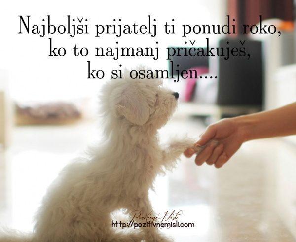Najboljši prijatelj ti ponudi roko - Misli o psih in prijateljih