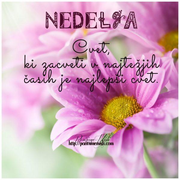 NEDELJA - Cvet,  ki zacveti v najtežjih