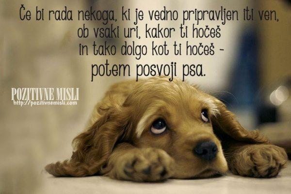 Posvoji psa - lepe misli o živalih