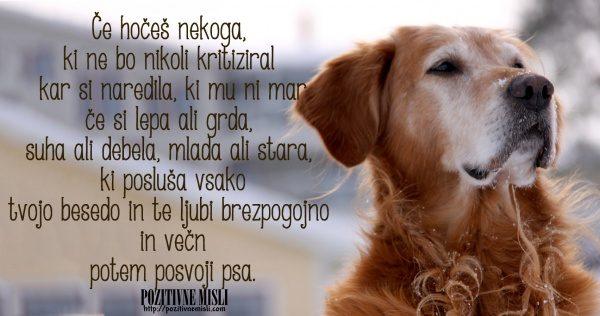 Posvoji psa - lepe misli o živalih 3