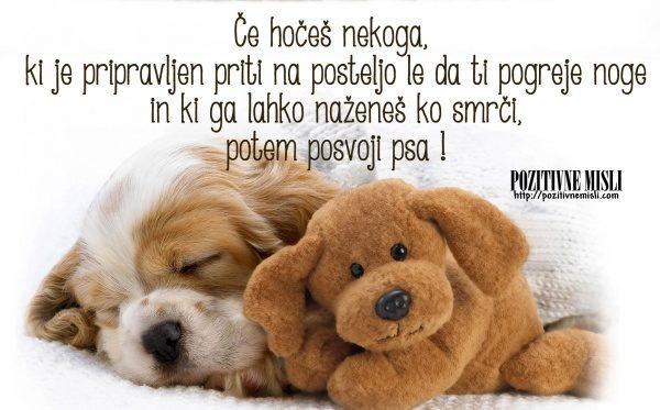 Posvoji psa - lepe misli o živalih 4