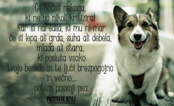 Posvoji psa - lepe misli o živalih 5