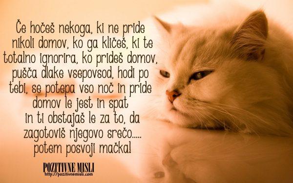 Posvoji mačka