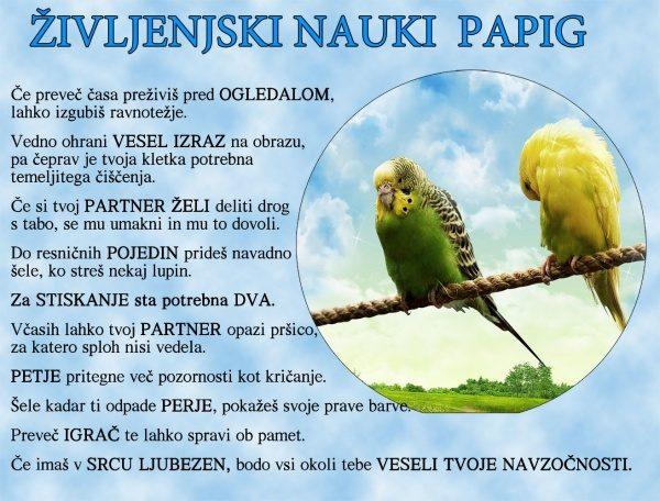 Življenjski nauki papig